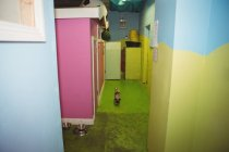 Dog walking beside dog enclosures at dog care center — Stock Photo