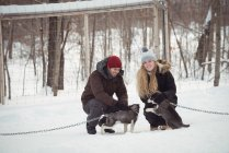 Mushers petting young Siberian dogs during winter — Stock Photo