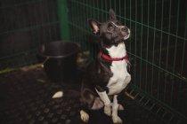 Любопытная собака в клетке в собаки уход центр — стоковое фото