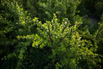 Nahaufnahme der Grünpflanze Textur — Stockfoto