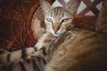 Крупный план табби-кота, лежащего на деревянном стуле и декоративной подушке — стоковое фото