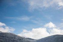 Заснеженные горные леса в Банфе, Альберта, Канада — стоковое фото