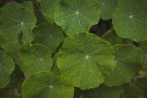 Крупный план зеленых листьев на растении — стоковое фото
