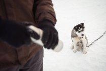 Погонщик Холдинг термос пока молодой Сибирский собака, сидящая на снегу — стоковое фото