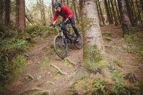 Низкий угол обзора горного велосипедиста, движущегося вниз среди деревьев в лесу — стоковое фото