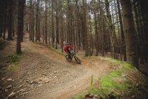 Велосипедист по грунтовой дороге за деревом в лесу — стоковое фото