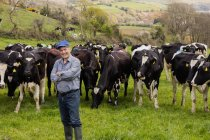 Портрет счастливого фермера, стоящего против коров на поле — стоковое фото