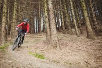 Front view of mountain biker riding on dirt road among trees in woodland — стоковое фото