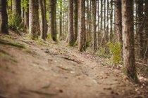 Leere Straße inmitten von Bäumen im Wald — Stockfoto