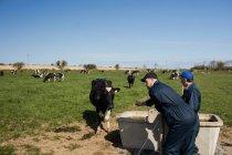 Landarbeiter stehen an sonnigen Tagen auf dem Feld am Trog — Stockfoto