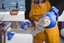 Mittelteil eines Fischers, der Fisch auf dem Boot hält — Stockfoto