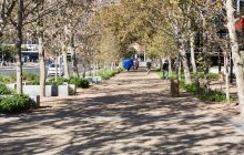 Tree lined pathway through a park in daylight — Stock Photo