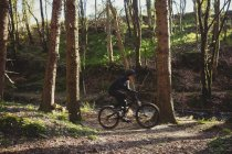 Велосипедист среди деревьев в лесу — стоковое фото