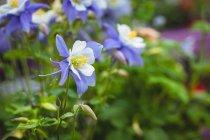 Close-up de flores e botões no centro do jardim — Fotografia de Stock