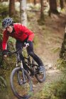 Езда на велосипеде по деревьям в лесу — стоковое фото