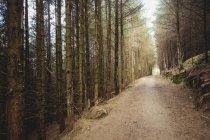 Strada vuota tra gli alberi nella foresta — Foto stock