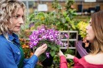 Zwei Floristinnen schneiden Blumen im Gartencenter mit der Gartenschere — Stockfoto