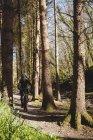 Ciclista de montaña en ruta en el bosque - foto de stock