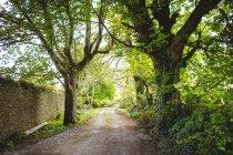 Fußweg zwischen Bäumen im Park — Stockfoto
