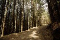 Chemin de terre vide au milieu des arbres dans les bois — Photo de stock