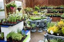 View of potted plants in garden center — Stock Photo