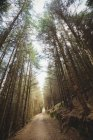 Empty dirt road amidst trees in forest — Stock Photo