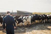 Вид сзади фермер, стоя у крупного рогатого скота на поле против ясного неба — стоковое фото