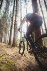 Вид сзади на горных велосипедистов в лесу — стоковое фото