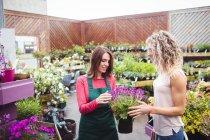 Floristin spricht mit Frau, die Pflanze im Gartencenter kauft — Stockfoto