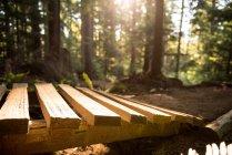 Close-up de caminho de madeira na luz solar na floresta — Fotografia de Stock