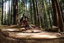 Велосипедист мужского пола катается в лесу на солнечном свете по тропинке — стоковое фото