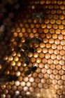 Primer plano de las abejas en el marco del panal - foto de stock