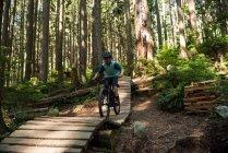 Велосипедист в лесу на солнце — стоковое фото