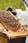 Cropped image of Beekeeper holding and examining beehive in field — Stock Photo