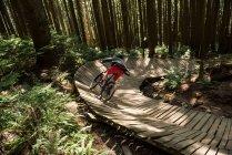 Велосипедист мужского пола на деревянной дорожке в лесу при солнечном свете — стоковое фото