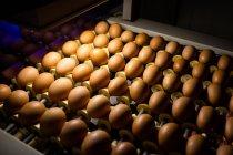 Ovos na qualidade de controle de iluminação na fábrica de ovos — Fotografia de Stock