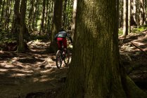 Rear view of male cyclist cycling in forest in sunlight — Stock Photo