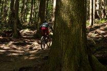 Вид сзади на велосипедиста мужского пола, катающегося в лесу на солнце — стоковое фото