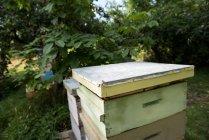 Colmenas de abejas en un jardín colmenar en un día soleado - foto de stock