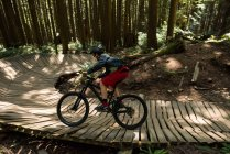 Велосипедист в лесу на солнце, вид сбоку — стоковое фото
