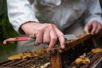 Міделю бджоляр видалення стільники з вулик в саду Пасіка — стокове фото