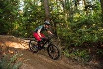 Велосипедист в лесу в солнечный день — стоковое фото