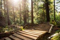 Caminho de madeira na floresta verde à luz do sol — Fotografia de Stock