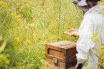 Imker halten und begutachten Bienenstock im Feld — Stockfoto