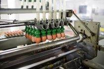 Яйца движутся по производственной линии на заводе — стоковое фото