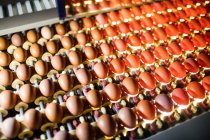 Eggs in lighting control quality in egg factory — Stock Photo