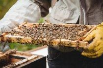 Zugeschnittenes Bild der Imker halten und Prüfung Bienenstock im Feld — Stockfoto