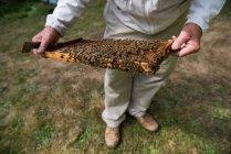 Imker Prüfung Bienenstock im Bienenhaus Garten — Stockfoto