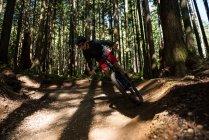 Молодой велосипедист катается на велосипеде в лесу на солнце — стоковое фото