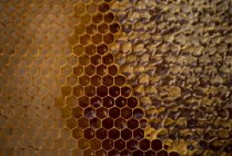 Primer plano de panal lleno de miel - foto de stock